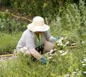 Pulling weeds, not your back